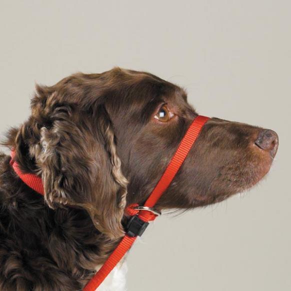 Black Dog Gentle Leader