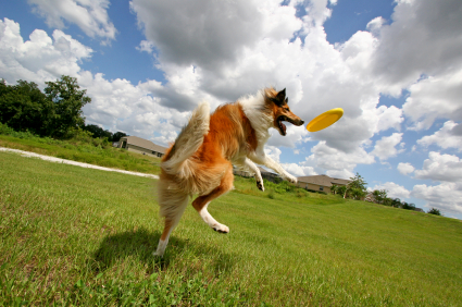 Best Dog Parks in Madison, WI