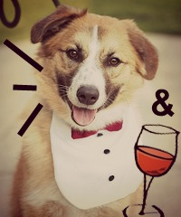 Dane County Humane Society Bark & Wine Event