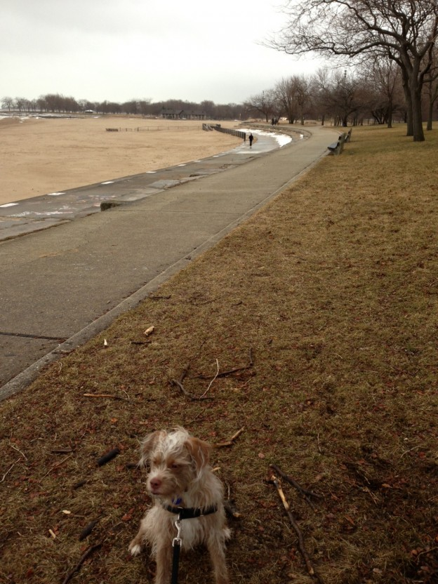 Vern on a scenic dog walking route in Chicago