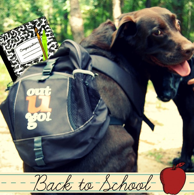 Back to School Pet Visits