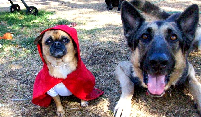 boulder-denver-dogs-in-halloween-costumes