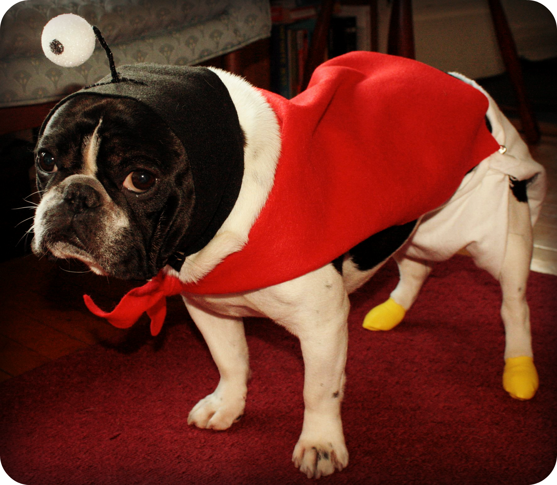 chicago-otis-in-nibbler-futurama-dog-halloween-costume