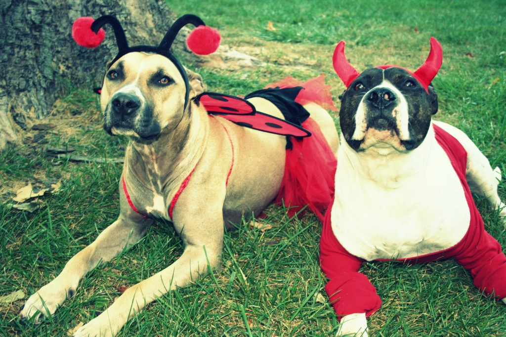 ladybug-devil-Naperville-dogs-in-Halloween-costumes