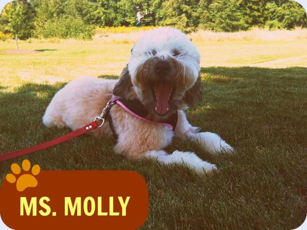 molly-dog-walking-in-naperville