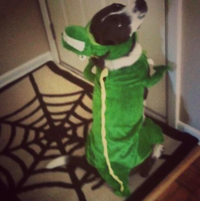 naperville-dog-tucker-james-in-halloween-costume