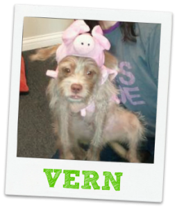 Vern office dog in Halloween costume