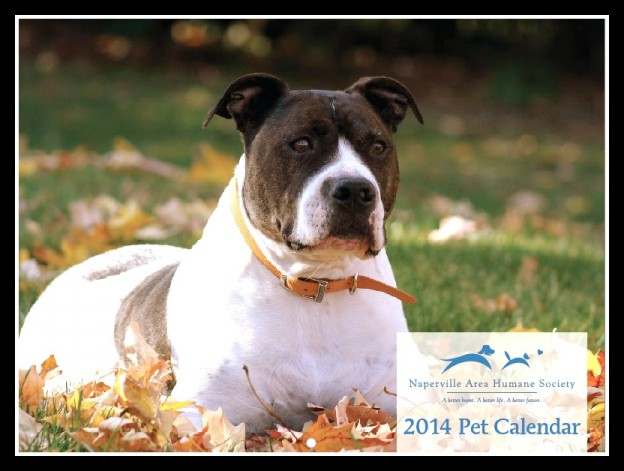 Naperville-Area-Humane-Society-2014-Pet-Calendar-Cover-Dog