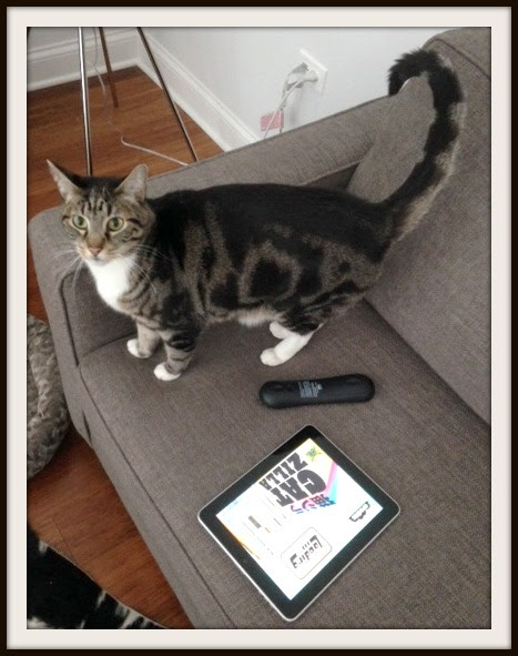 chicago-cat-playing-ipad-game-catzilla-vera