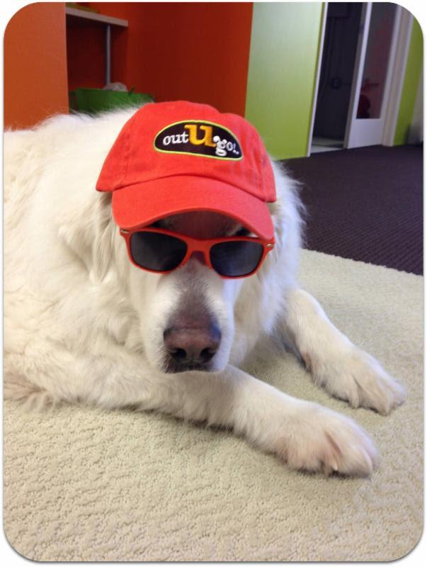 Denver & Boulder Office Dog Jack