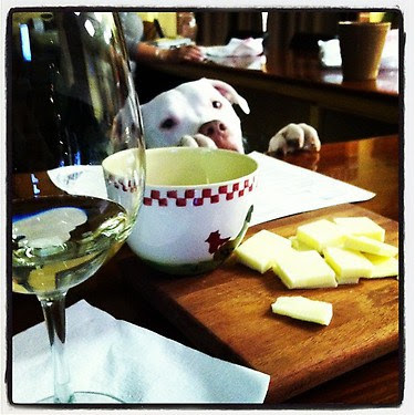 Dog with wine and cheese