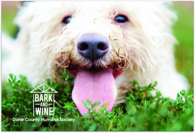 Dane County Humane Society Bark and Wine Event