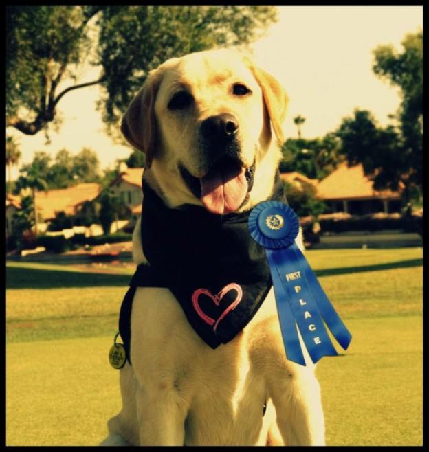 Naperville Pet Event 11th Annual Rover Rescue Pet Dog Show