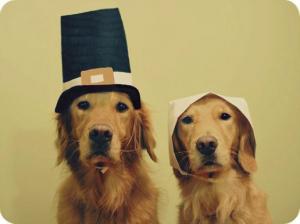 pilgrim-puppies