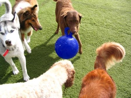 Best Dog Parks in Boulder, CO