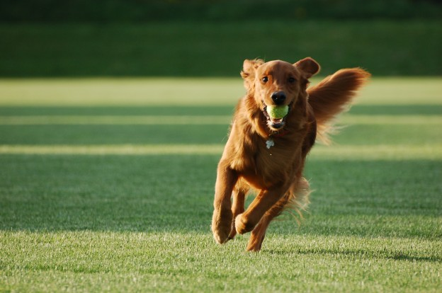 Best dog parks in Oak Park, IL