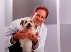 Best Vets in Denver - VCA Animal Care Associates