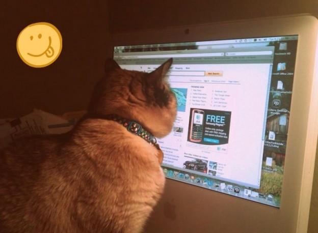 Sierra kitty entertains herself on the computer