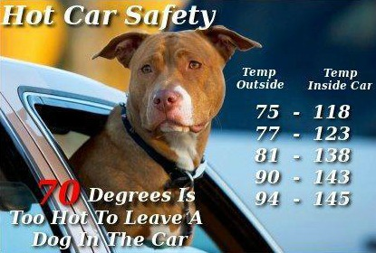 Hot Car Safety Dogs