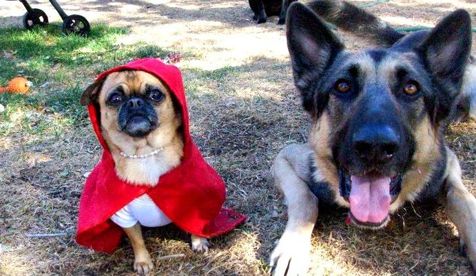 boulder-denver-dogs-in-halloween-costumes