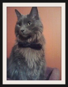 naperville-cat-in-bow-tie-meander-halloween-costume