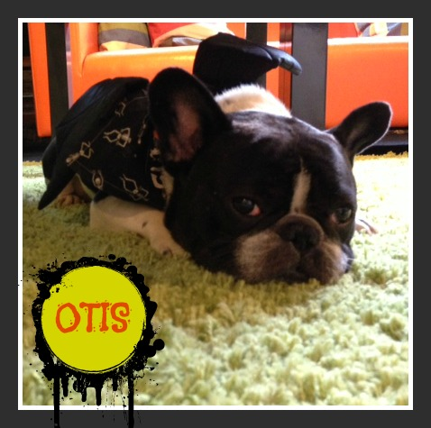 chicago-otis-dog-in-bat-halloween-costume