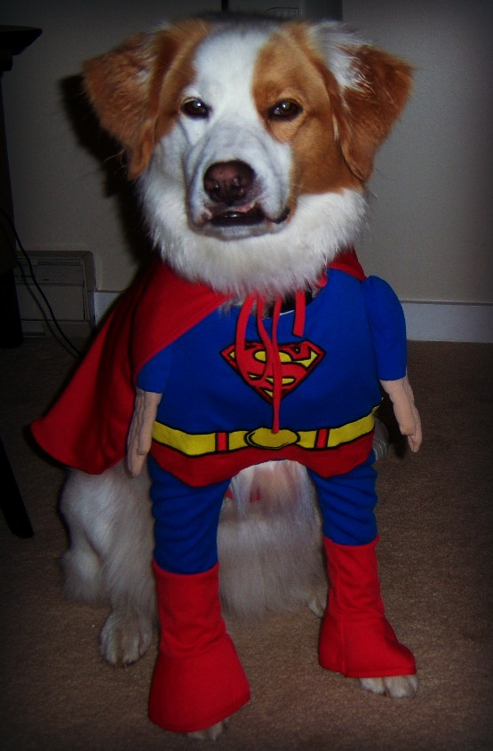 south-loop-dog-chloe-superhero-halloween-costume