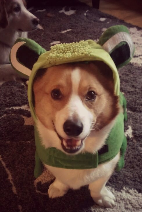 south-loop-dog-milhouse-in-frog-halloween-costume