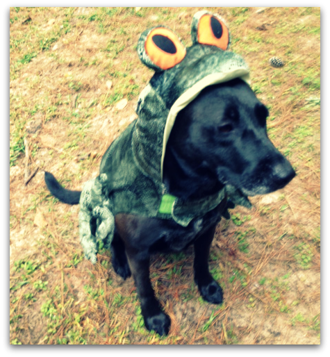 tallahassee-dog-delta-in-halloween-costume
