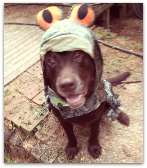 tallahassee-dog-jingbo-in-halloween-costume