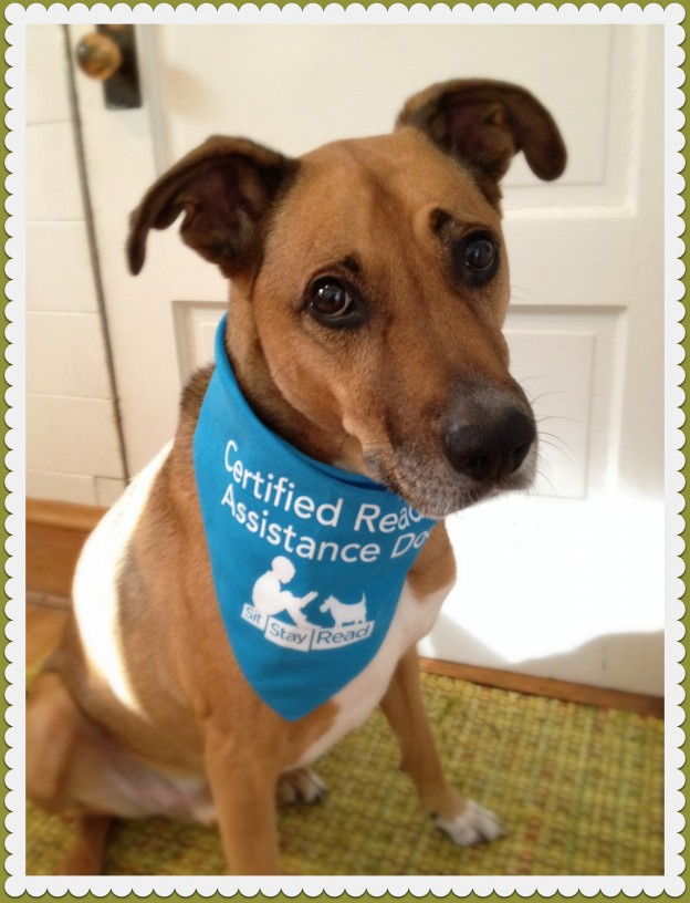Oak Park dog Buster wears his SitStayRead Certified Reading Assistance Dog bandana