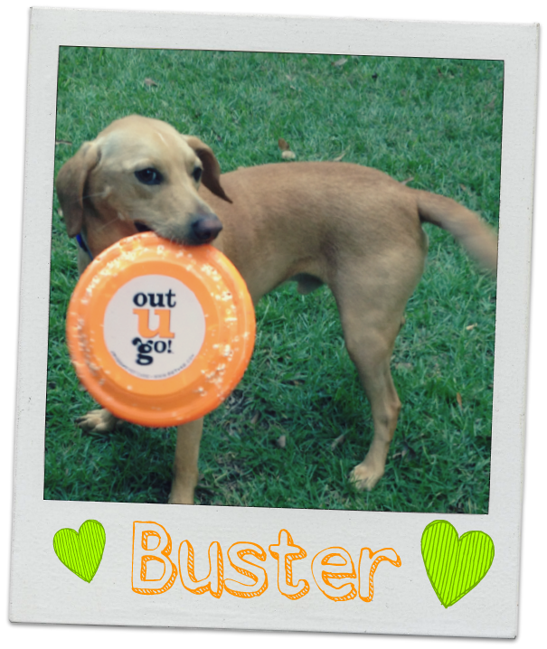 Tallahassee-dog-Buster