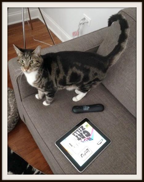 chicago-cat-playing-ipad-game-catzilla-vera