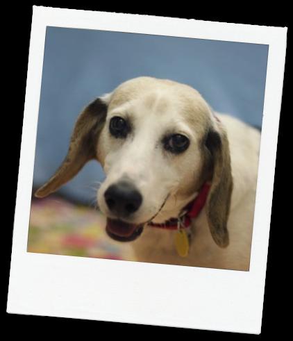 naperville-area-humane-society-dog-gretta