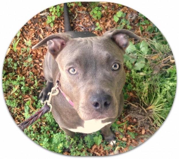 Madison-dog-Azul