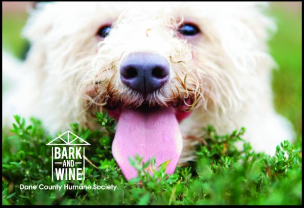 Dane County Humane Society Bark and Wine Event