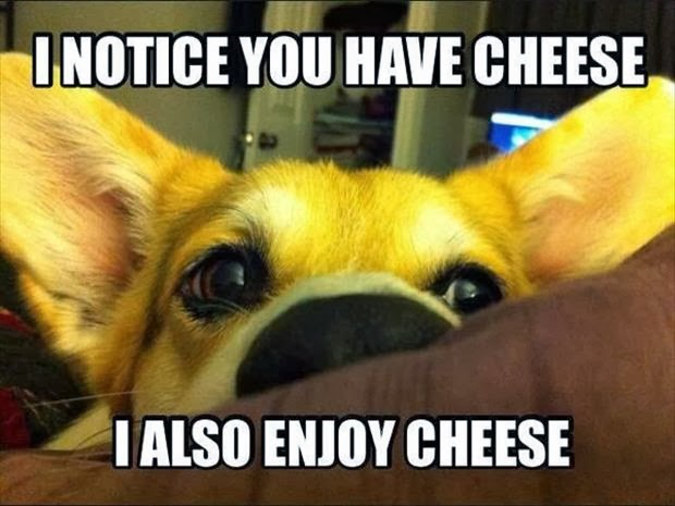 I notice you have cheese