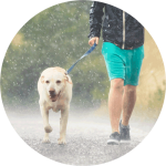 During rainy day dog walks, start with short distances and slowly add distance.